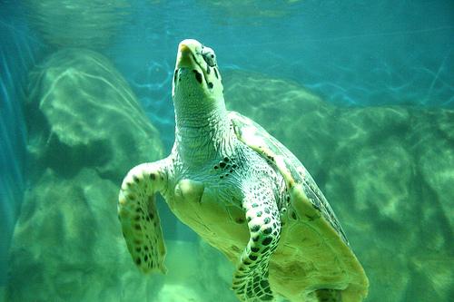 1ehomens - aquário