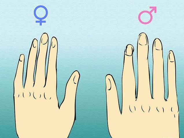 Mãos Masculina e Feminina
